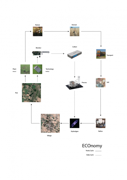 A rural dedicated economy of scales in which two energy-harvesting cycles run adjacent to one and other. One consisting of a natural energy material, harvested yearly and providing an annual income to families. And the other an artificial energy producing catalyst that provides daily energy needs for family dwellings.