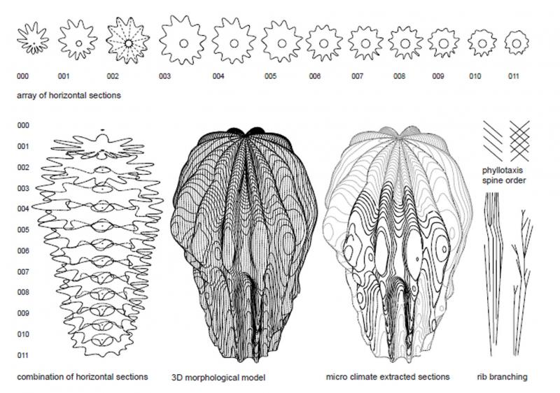 Morphological Model of the Saguaro Cactus. 