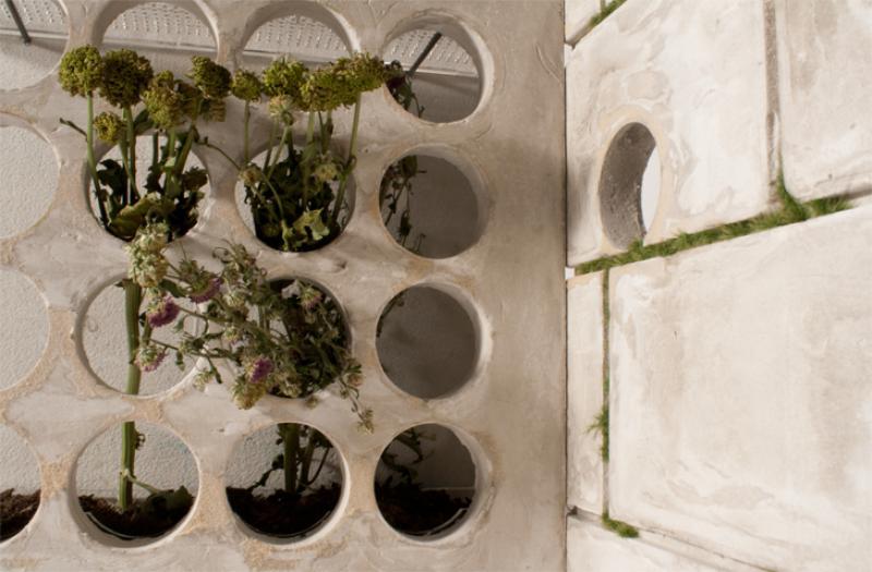 Nature: the ability to propagate in urban condition