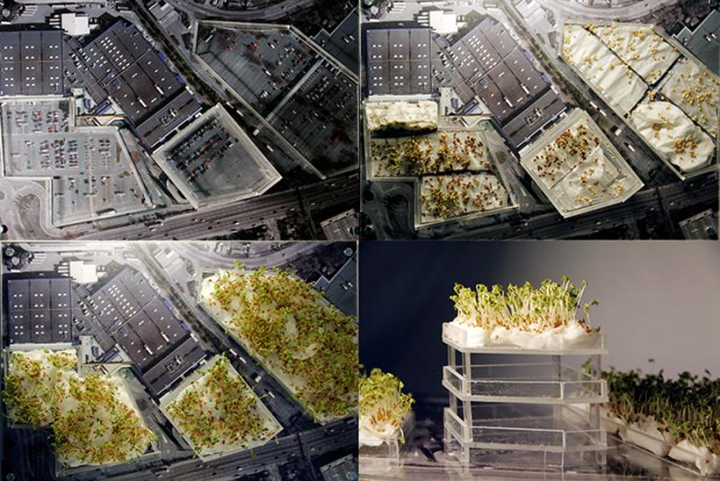 Redefining a ritual for an existing institution (Fabian Society), to define what an institution is and how to bring together the idea of an institution in order to create a space to inhabit the people.